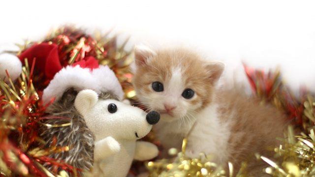 ラデュレクリスマスコフレ