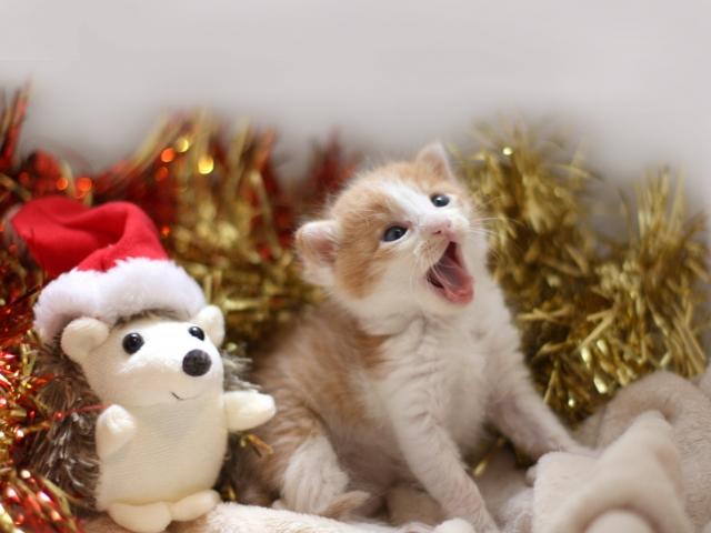 ジルスチュアートクリスマスコフレ